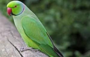 médico veterinario de aves silvestres y expoticas
